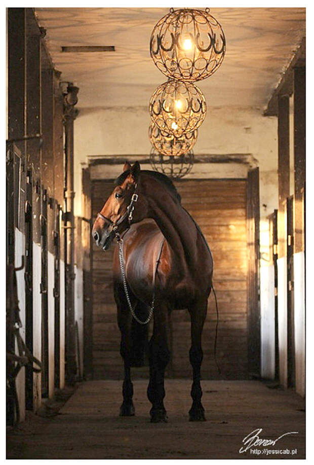 С уважением к лошади: восхитительный «конный стиль»