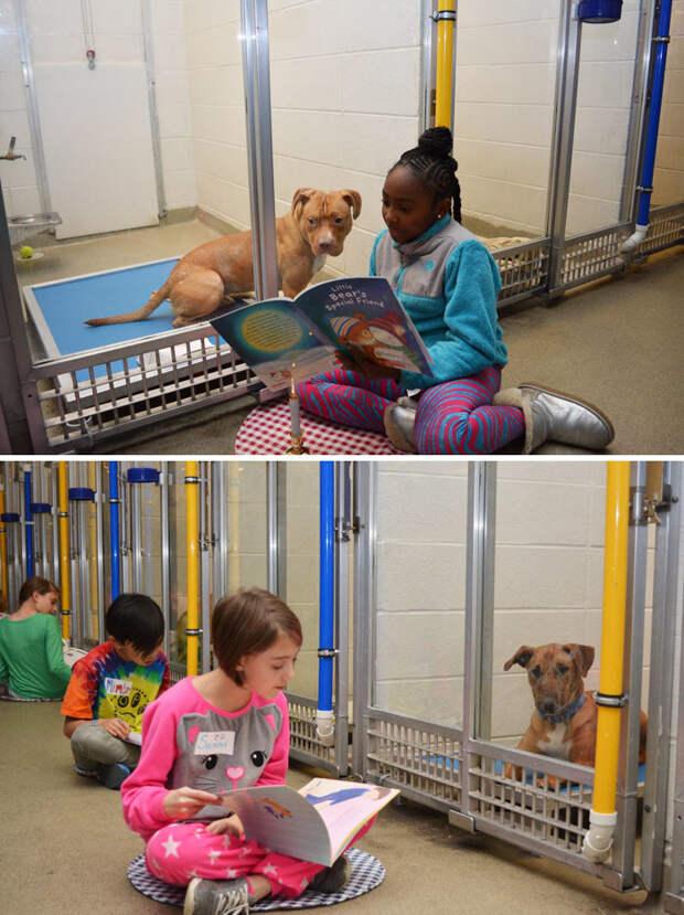 Школьники приходят в собачий приют читать собакам книжки, чтобы те привыкали к домашней атмосфере Счастливый конец, животные, спасение
