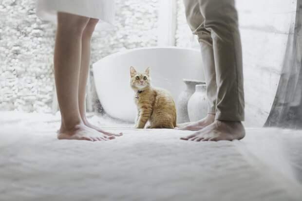 Кот и люди