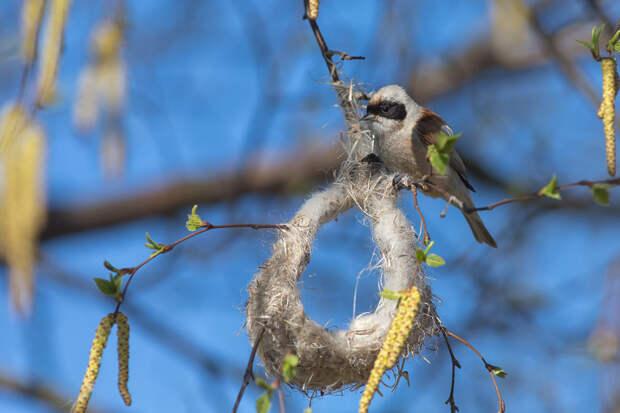 Тайна строительства птичьих гнезд