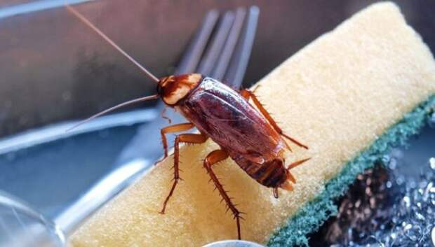 5 доступных и экологичных способа борьбы с тараканами