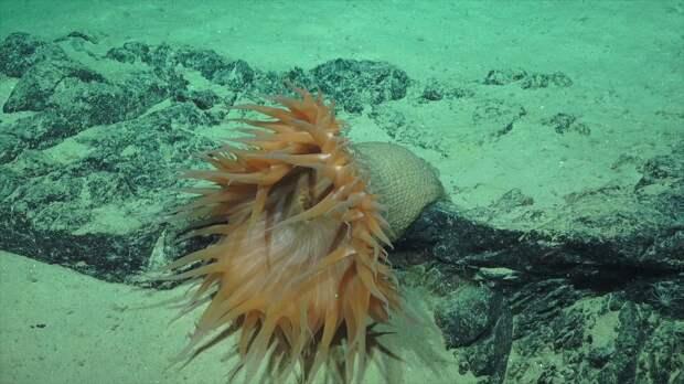 Странные существа рифа Нингалу
