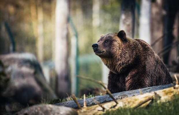 Как напугать медведя. Случай из жизни