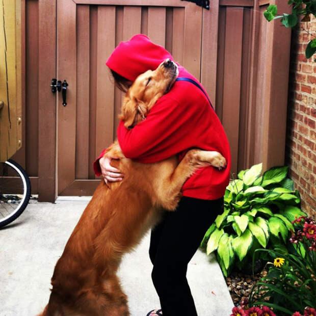 Короткие истории о преданности собак