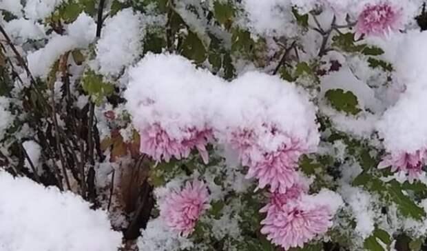 Первый снег засыпал Приморье, аего фотографии наполнили соцсети