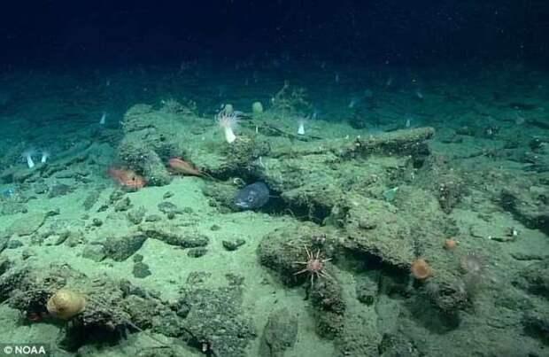 На дне Атлантики найдена загадочная аномалия