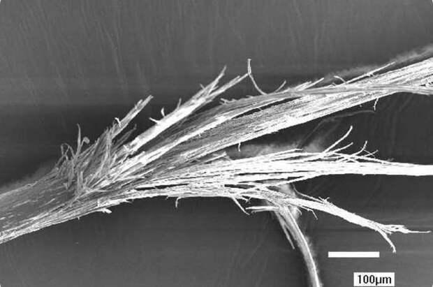 8. Волосы на голове организм, под микроскопом