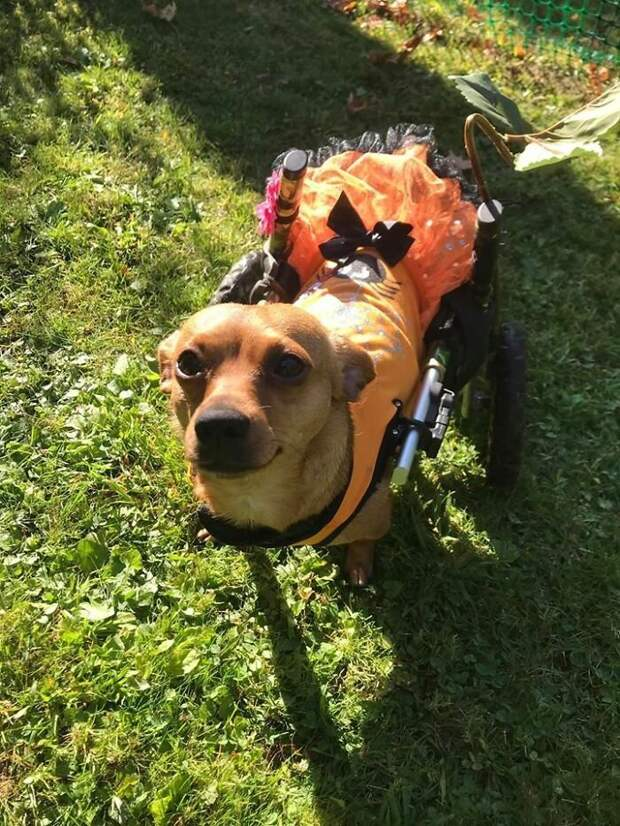 Американка приютила 6 собак-инвалидов, подарив им море счастья и лучшую жизнь