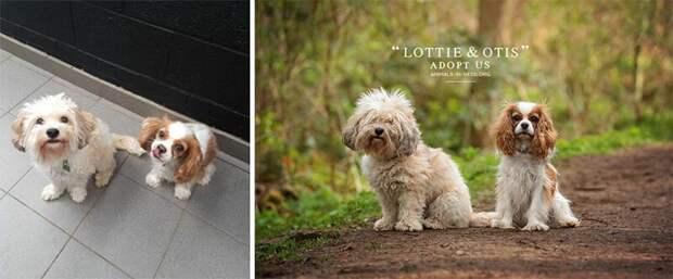 9. Лотти и Отс животные, помощь, портрет, приют, собака, фотограф, хозяин