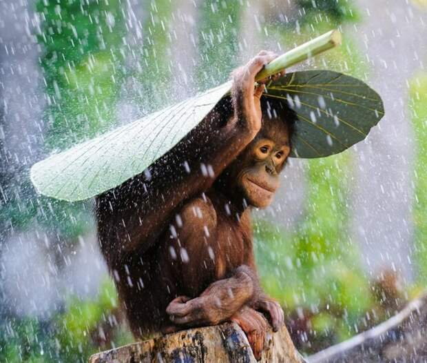 Andrew Suryono / National Geographic