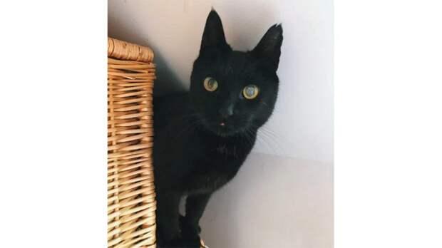 В Великобритании кот вернулся домой после 8 лет отсутствия
