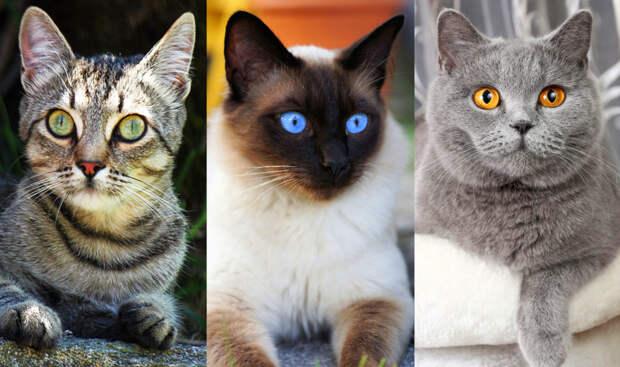 Почему пород кошек меньше, чем пород собак, а  также почему собаки не любят кошек ?