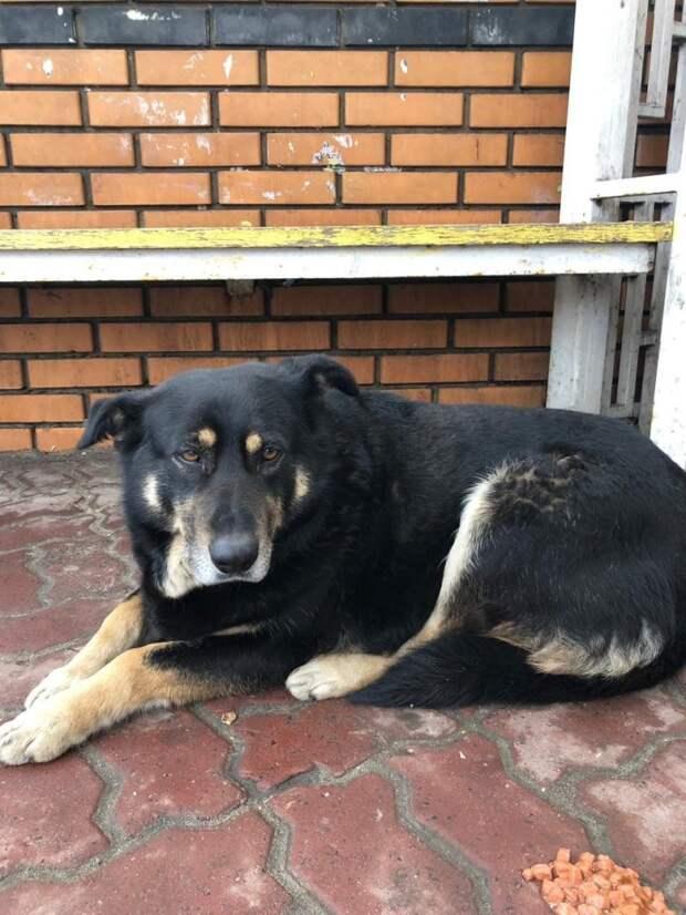 В Курске собака преданно ждёт свою умершую хозяйку преданность, собака, фото