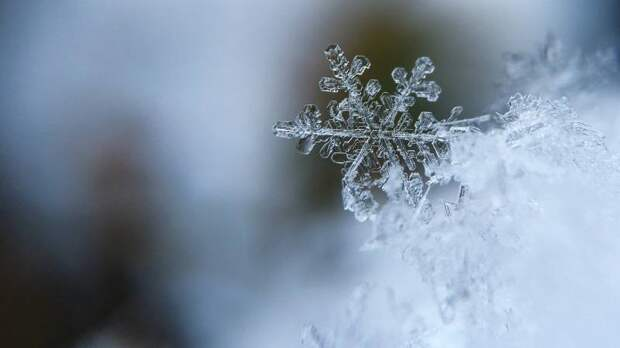 Первый снег выпал в Калининградской области