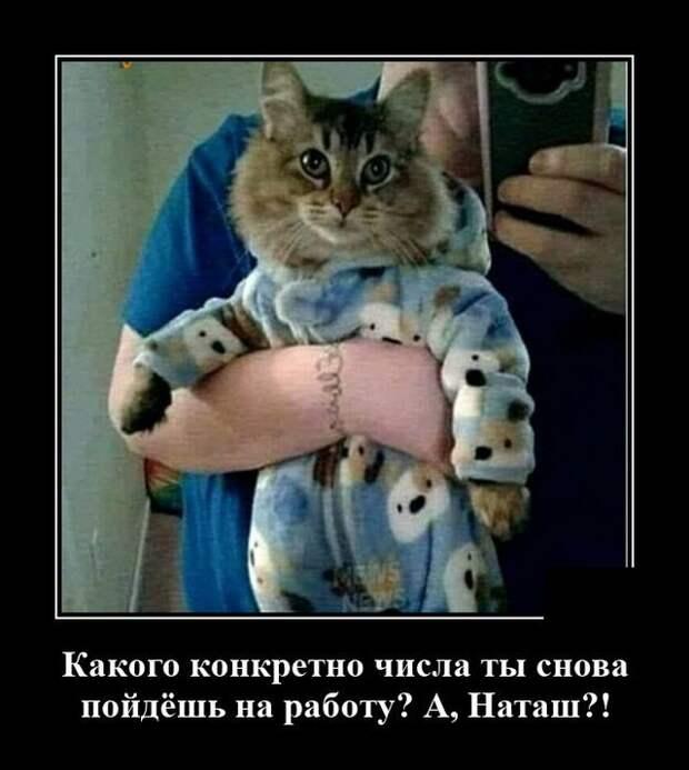 Демотиватор про кота и работу