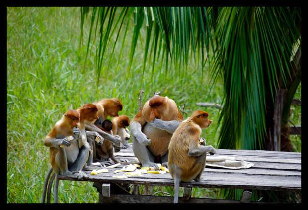 группа носачей
