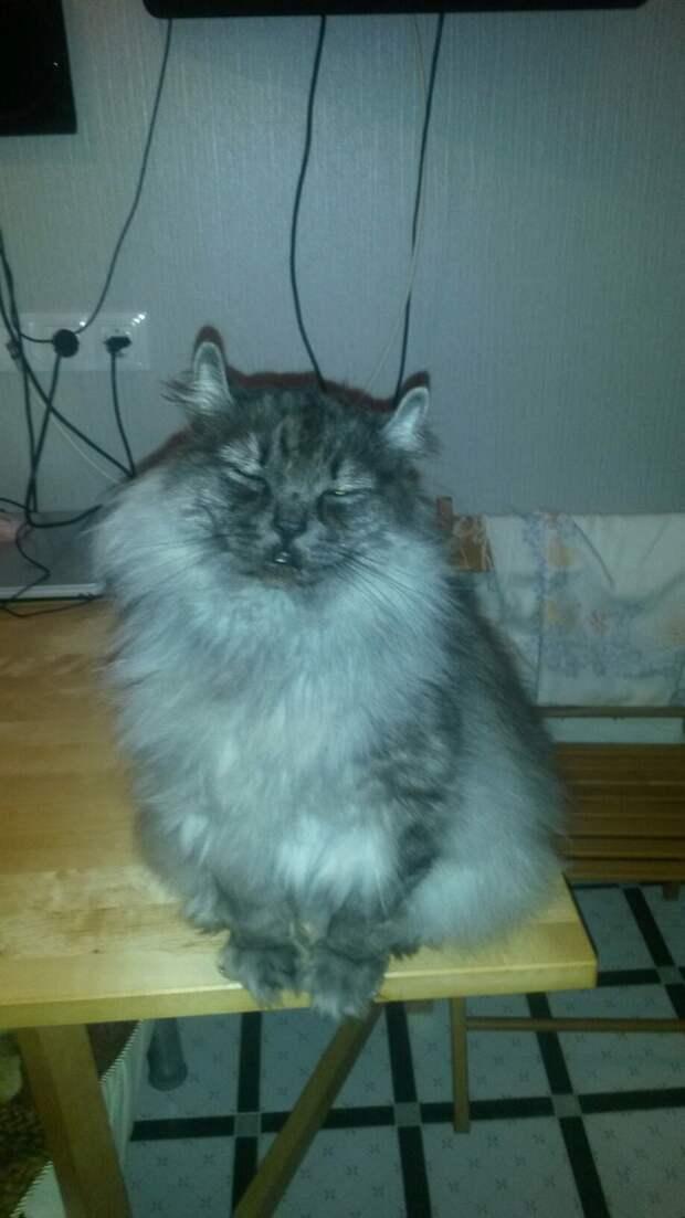 Приехала и увидела этого смешного котенка...