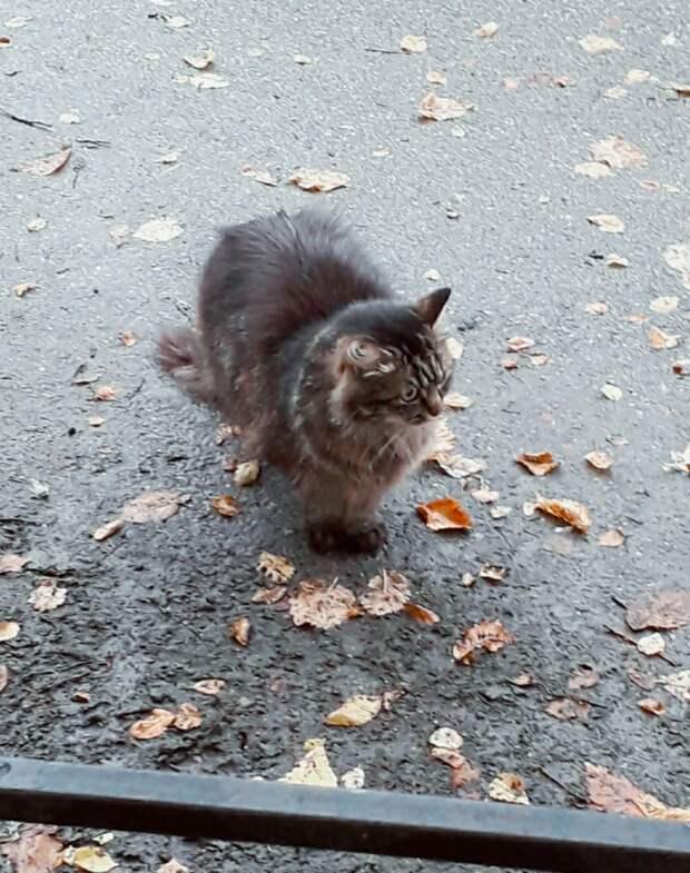 Помогите!!! Скоро похолодает, ночи уже далеко не тёплые, а растерянные коты впервые в жизни на улице...
