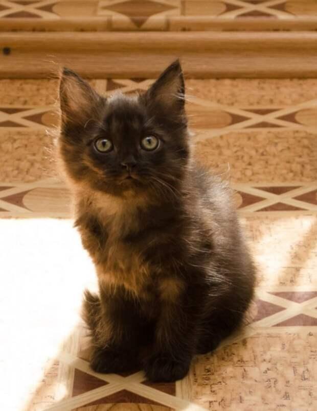 Черный, бездомный котенок одиноко сидел на асфальте, опустив голову