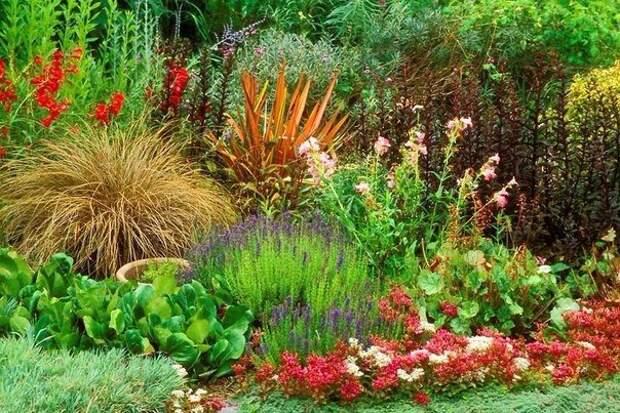 43 вида самых декоративных многолетних цветов