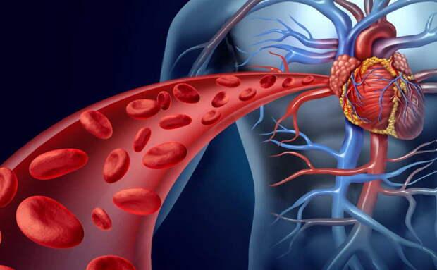 Чистая кровь - основа основ! Мы часто лечимся таблетками и бегаем по врачам, когда все что нужно - почистить кровь!