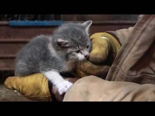 Это сейчас она роскошная киса, а когда-то была бездомным котёнком, который очень хотел иметь дом