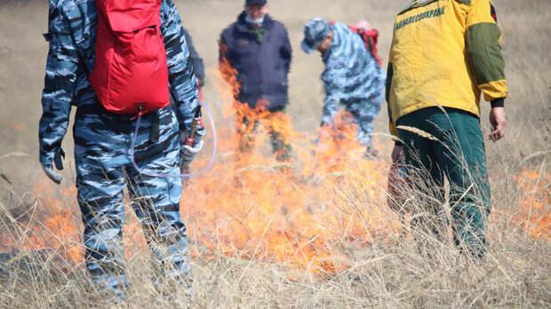 Контроль завыжиганием сухой травы усилят вРостовской области