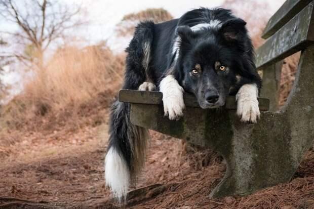 3 место среди фотографов 11-17 лет - Кирстен ван Равенхорст, Нидерланды Кеннел клаб, животные, конкурс, лондон, портрет, собаки, фото, фотография года