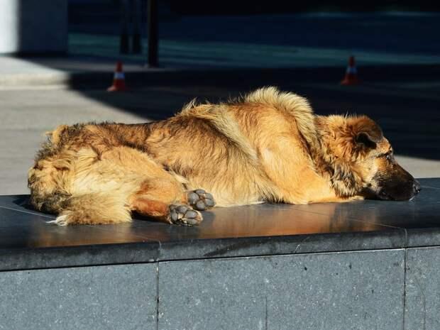 Жителей Удмуртии призвали сдать макулатуру, чтобы помочь животным приюта