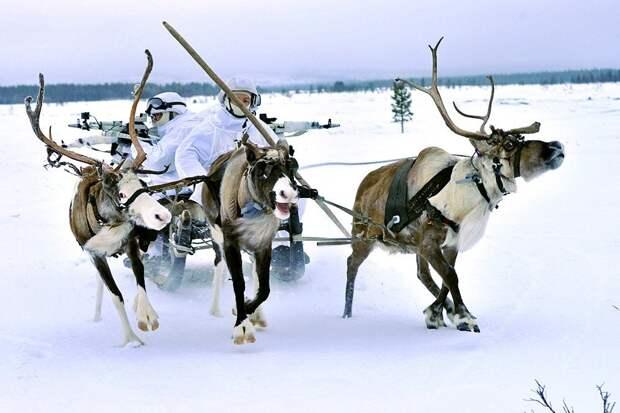 Норвежской армии посоветовали брать пример с российских военных