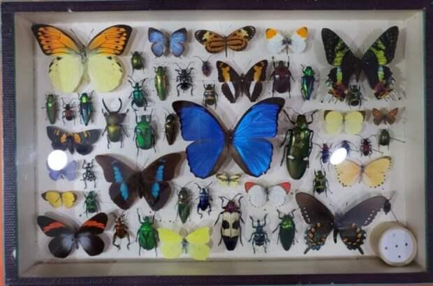 Почему люди перестали коллекционировать бабочек?