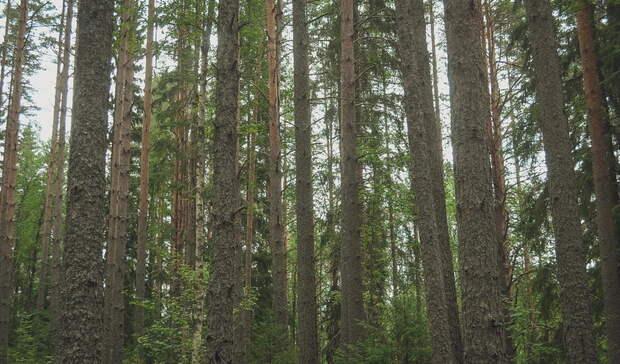Лес за микрорайоном Столичный в Ижевске не застроят