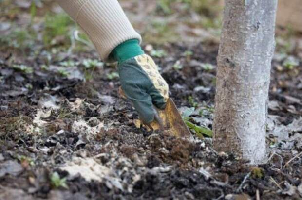 После сбора урожая обязательно проведите последнюю подкормку сада