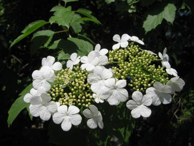 Весеннее цветение и летние цветы