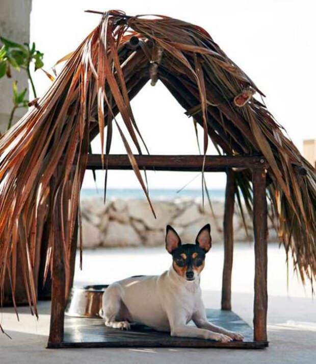 Летний домик для собаки.