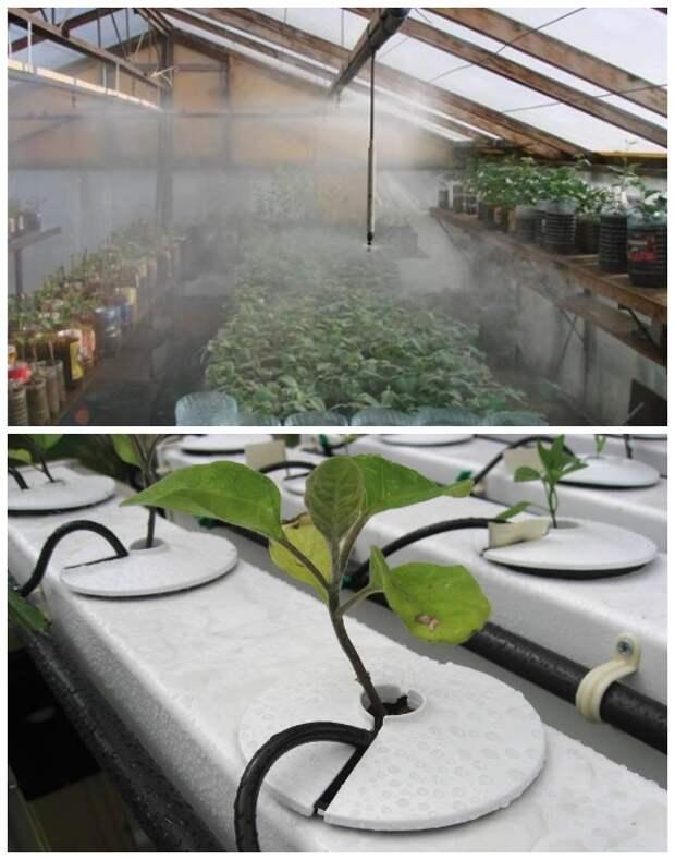 Различные способы полива растений в теплицах (Орошение и капельный).