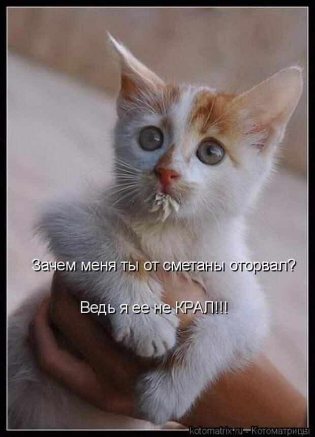 Лучшие котоматрицы за прошедшую неделю