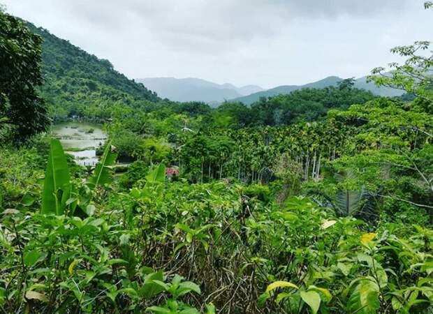 В Бразилии фотограф и его жена посадили 2,5 миллионов деревьев за 20 лет
