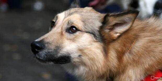 Собака, Фото: mos.ru
