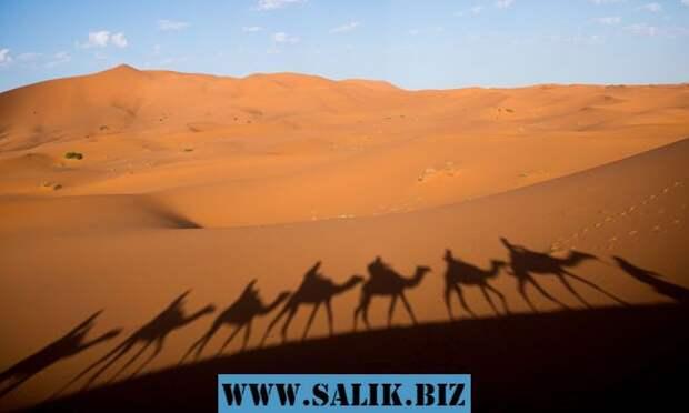 Пустыня Сахара зеленеет каждые 20 тысяч лет