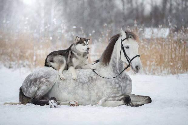 18 примеров неожиданной дружбы животных