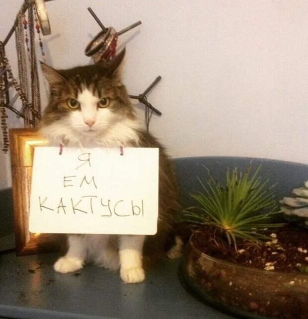Кот смотрит так, как будто следующим будет съеден фотограф