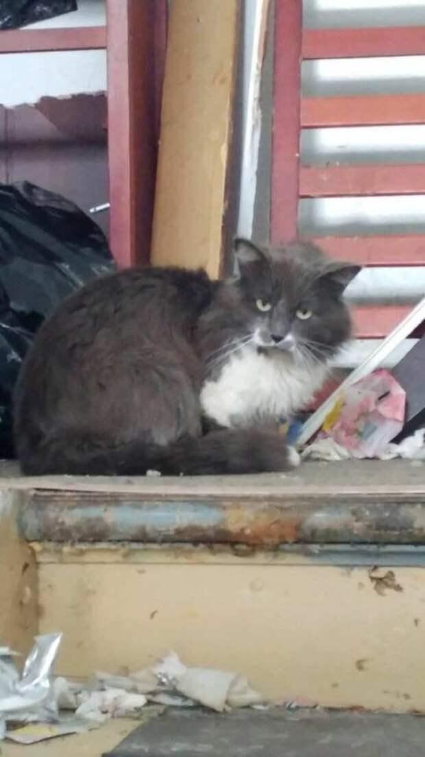 """На улице был найден кот с запиской: """"Пожалуйста, не трогайте кота. Есть причина, по которой он здесь находится. Спасибо!"""""""