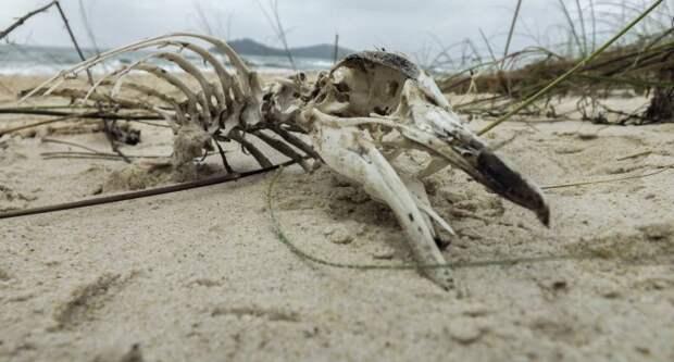 Ученые обнаружили вАнтарктиде мумии древних пингвинов
