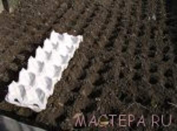 Маркер для посадки семян и рассады