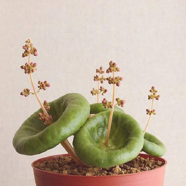 какое растение посадить