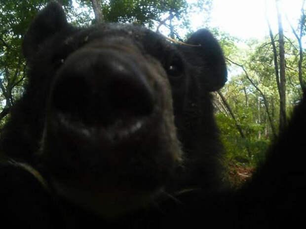 Камеры засняли зверей в лесу, пока их не видят люди
