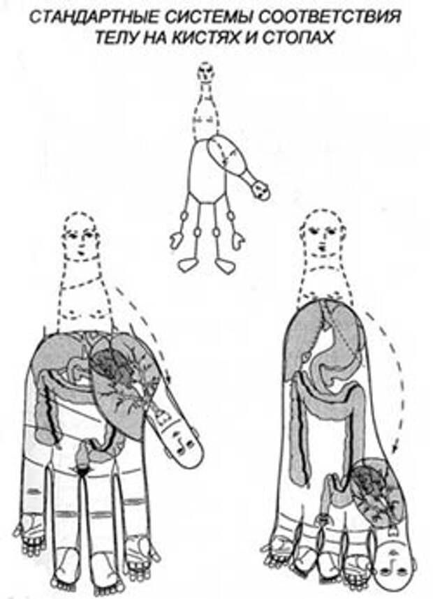 су-джок система соответствия человека на кисти
