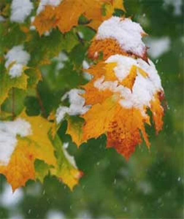 Поздняя осень. Первый снег