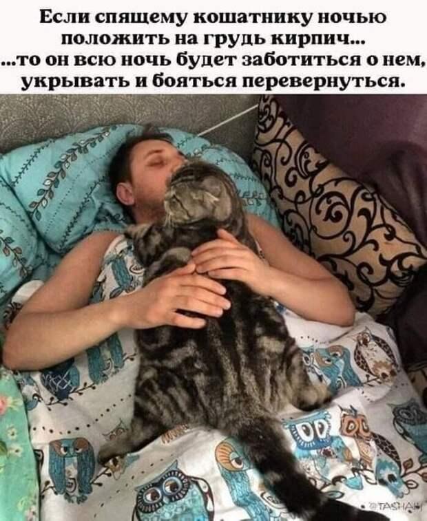 Возможно, это изображение (1 человек, кот и текст «если спящему кошатнику ночью положить на грудь кирпич... ..TO он всю ночь будет заботиться o нем, укрывать и бояться перевернуться. DU @TASHAR»)
